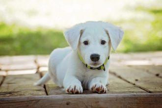 Yoga pup
